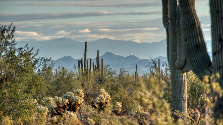 Take a trip to Phoenix, Arizona, and immerse yourself in the desert landscapes of White Tank Mountain Regional Park