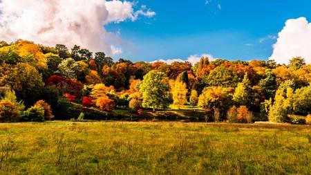 Visiting Winkworth Arboretum in autumn in a must