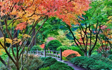 The Portland Japanese Garden is a beautiful display of lush greenery