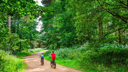 Enjoy the many hiking and biking trails of Thetford Forest
