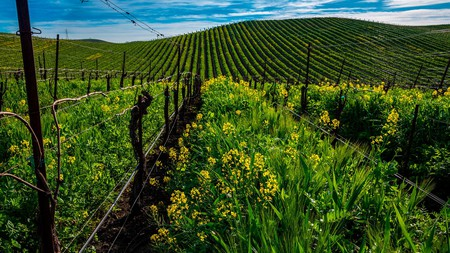 Discover the top places to stay near the verdant wine-producing area of California that is Grass Valley