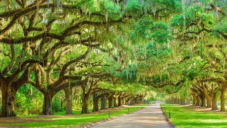 Stay close to Boone Hall Plantation and Gardens to make the most of your time at this historic attraction
