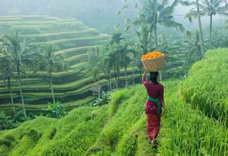 The rich, vast rice terraces of Bali will give you sensory overload