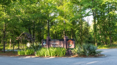 Congaree National Park may be a wilderness area, but there is no shortage of places to stay nearby