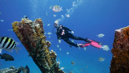 What lies beneath: beyond the bustling piers and roadside attractions of the Florida Keys is an underwater world of coral and wreck diving
