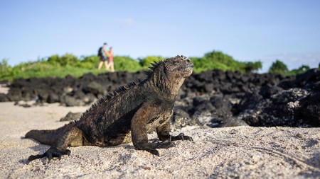 The extraordinary wildlife on the Galapagos Islands helped Charles Darwin to form his world-changing theory
