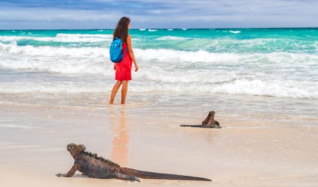 Visiting Ecuador's Pacific Coast is an incredible experience, especially with its unique wildlife in abundance on the shores