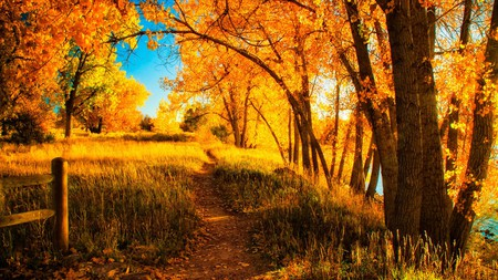 Fall is turning the leaves at Cherry Creek State Park golden