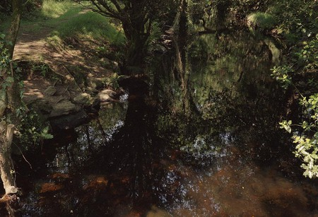 Tree Reflected in Water, Glendalough, June 2006 | Courtesy of Eva Vermandel