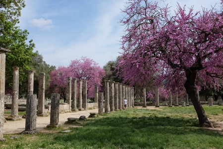 Cercis blooms in Olympia, Greece | © Kristoffer Trolle/Flickr