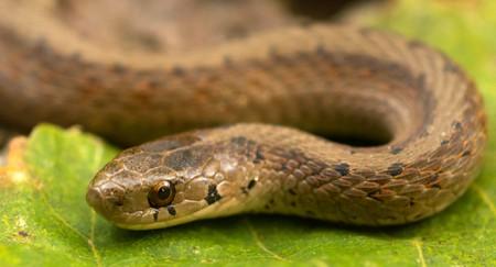 Brown snake | © John Robb / Flickr