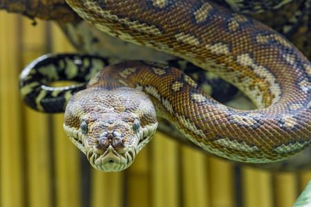 Snake | © Tambako The Jaguar / Flickr