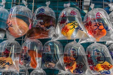 Fish market Mong Kok Kowloon in Hong Kong ©Ostill / Shutterstock