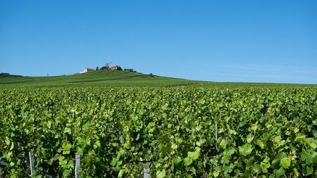 Verzenay vineyards   © Joe deSousa/Flickr