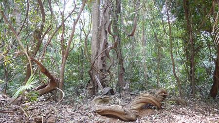Mollem National Park   © Dinesh Valke / Flickr