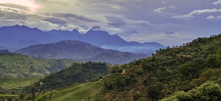 The jungles of Colombia