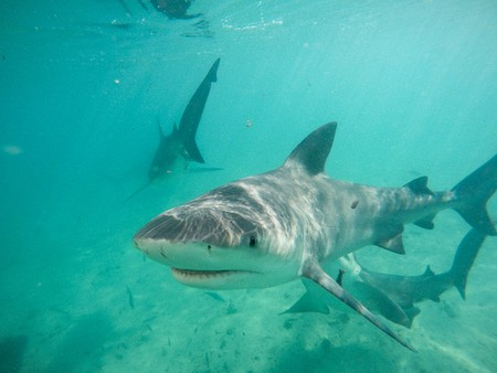 Surfers Share Stories and Encounters With Sharks