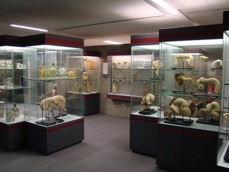Display cases in the museum