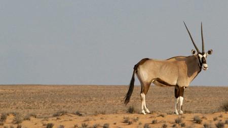 South-African-National-Parks_Kgalagadi