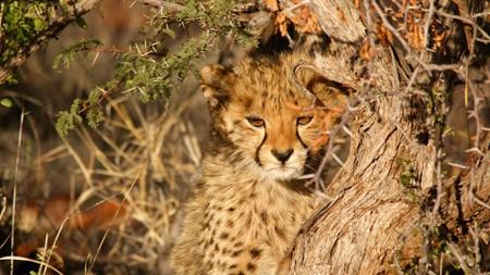 South-African-National-Parks_Kruger