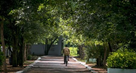 An idyllic walkway inside the Guindy National Park