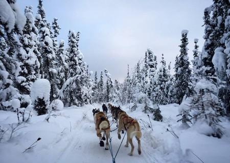 A Brief History of Alaska's Official Sport: Dog Mushing
