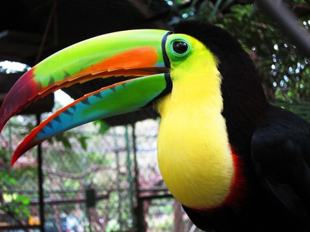 You might spot a toucan like this one in Calakmul Biosphere Reserve
