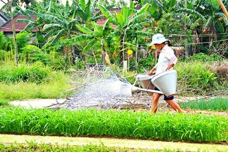 Vietnamese_Farmer_Working