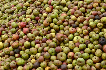 apples of normandy