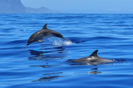 dolphin-2691864_1280