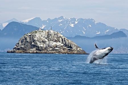 humpback-whale-1744267_1280