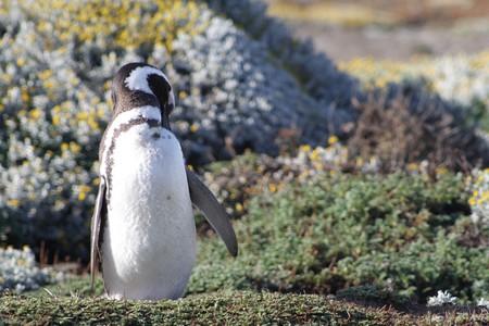 penguin-1388503_1280