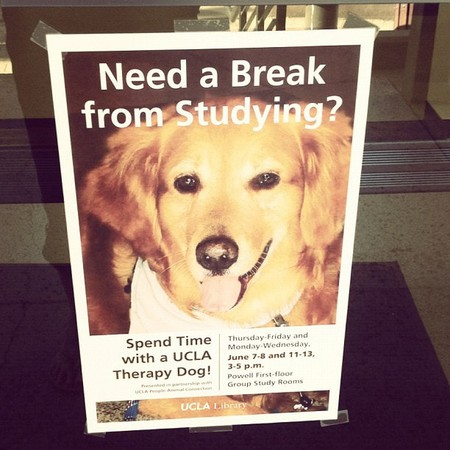 Puppy therapy sign offered on UCLA campus