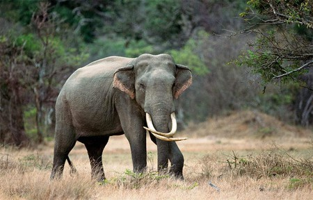13 Amazing Animals You Can See in Sri Lanka