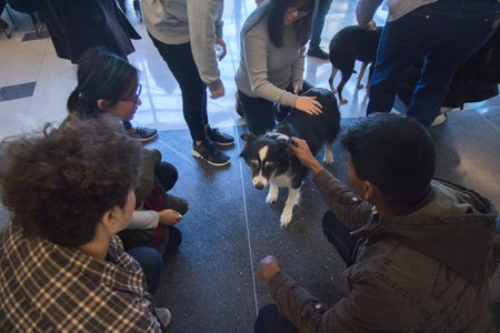 A therapy dog visits the UC Davis College of Engineering in February 2018