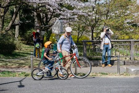 Cherry Blossom-Tokyo-Japan
