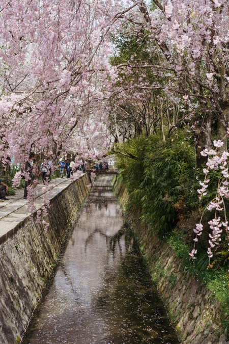 CHERRY BLOSSOM-PHILOSOPHER'S PATH-KYOTO-JAPAN