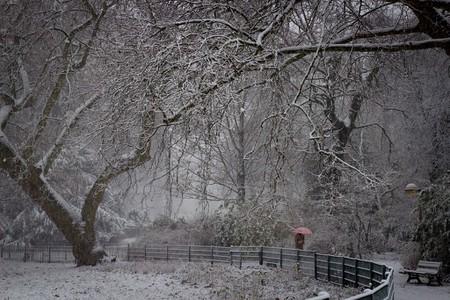 Antwerp in the snow