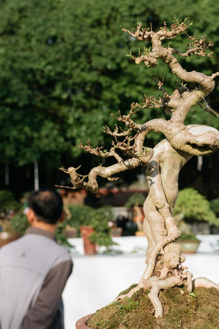 Sensational Vietnams Tradition Of Beautiful Bonsai Tree Art Wiring 101 Mecadwellnesstrialsorg