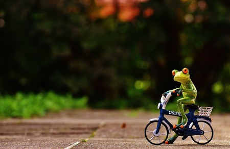 frog-1701079_960_720
