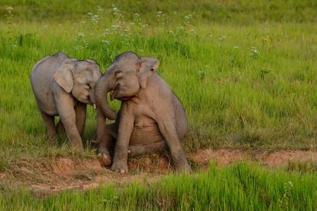 Elephants at Khao Yai National Park