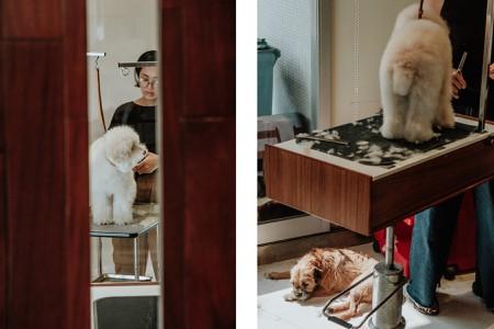 DogMan: Tokyo's Most Popular Canine Stylist