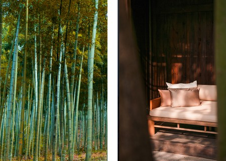 Bamboo forest and interior of Moganshan homestay
