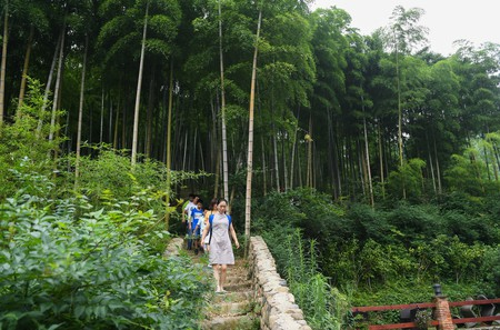 Tourists visit a bamboo forest next to a homestay lodging in Xiantan Village of Moganshan Town (one time use)