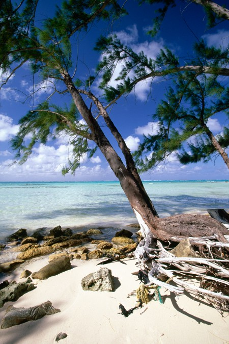 Caribbean Beach Trees, Rum Point, Grand Cayman Island, British West Indies. Image shot 02/2008. Exact date unknown.