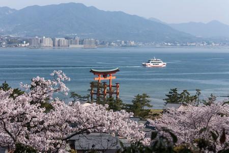 Torii of Itsukushima Shrine and Cherry Blossoms, Hatsukaichi, Hiroshima Prefecture, Japan.