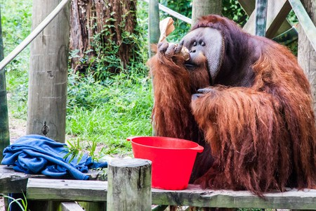 The Best Zoos in Texas to Experience Wildlife
