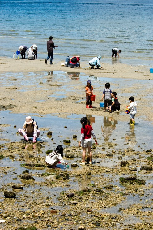 At low tide locals dig for oysters near the Itsukushima Shrine Miyajima, Japan.