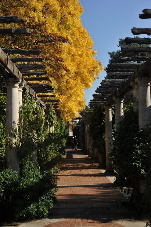 Hampstead Heath and pergola gardens