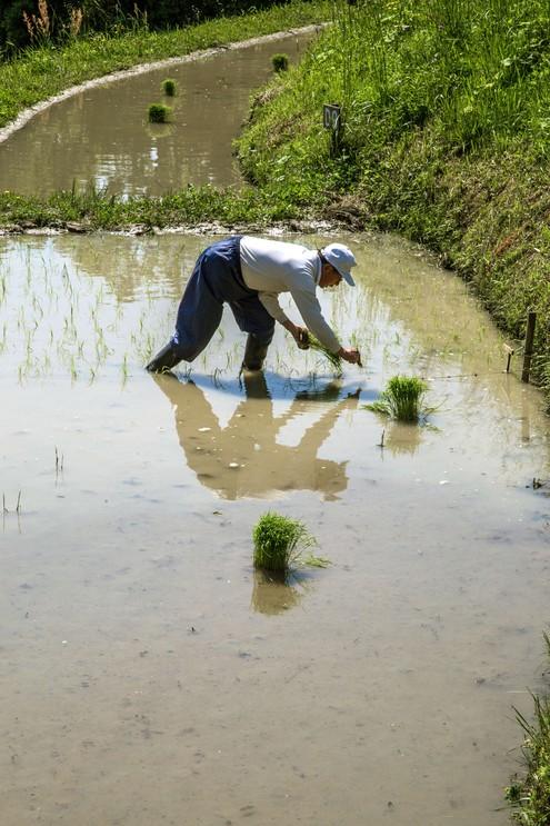 Senmaida rice terraces, Japan.
